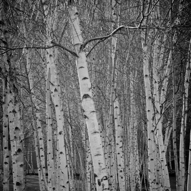 """Tate Modern Trees"" stock image"