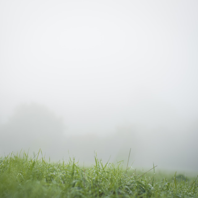 """The fog and the grass"" stock image"