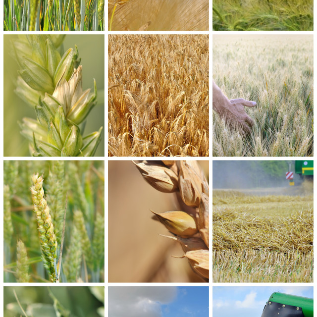 """""""collage of harvest"""" stock image"""