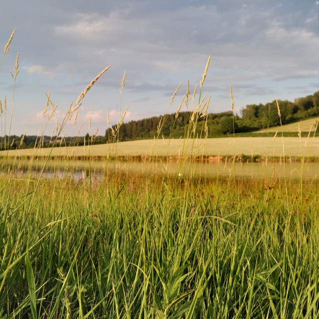 """""""grass in front of lake in Morvan - France"""" stock image"""