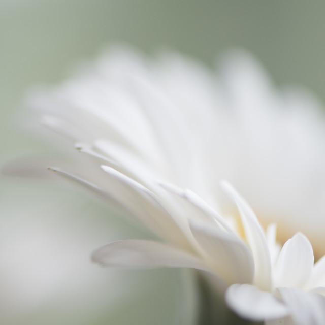 """""""Petal splendour"""" stock image"""