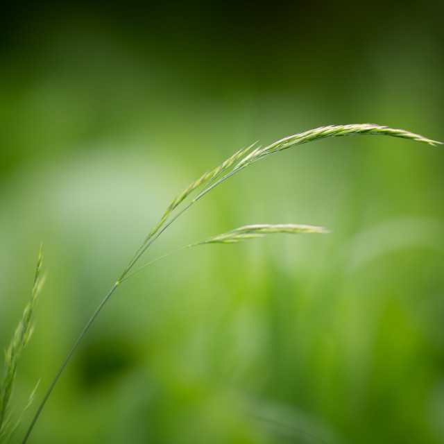 """Green Grass - Minimalist"" stock image"