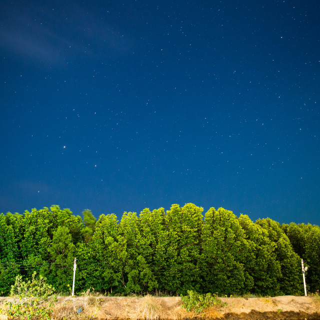 """""""Mangrove forest"""" stock image"""