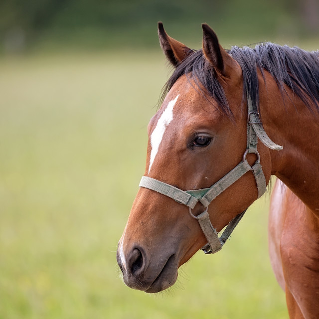 """""""Horse in a clearing, a portrait"""" stock image"""