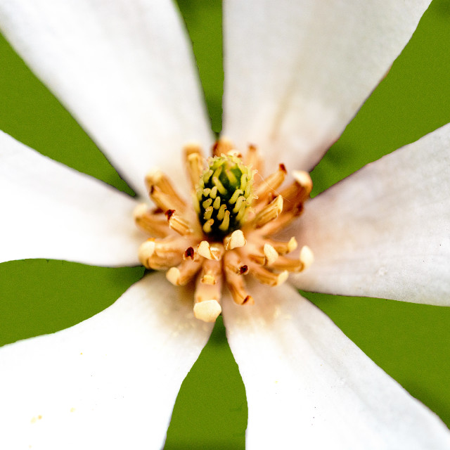 """White flower matters"" stock image"