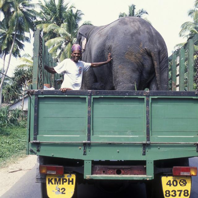 """SRI LANKA NUWARA ELIYA ELEPHANT TRANSPORT"" stock image"