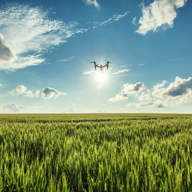 """""""Flying drone and green wheat field"""" stock image"""