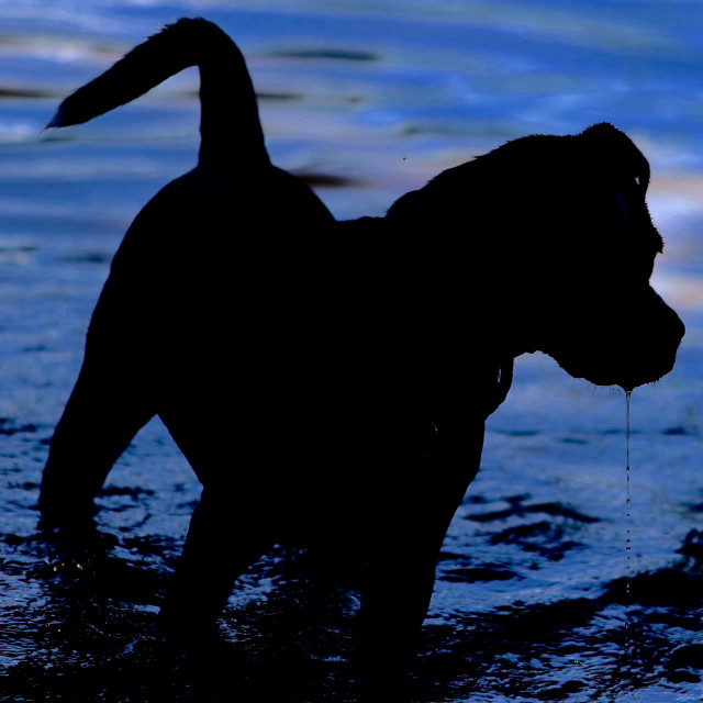 """Dog Silhouette"" stock image"