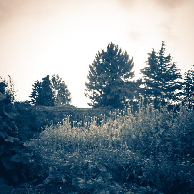 """Wildflowers in Country Garden - medium format film"" stock image"