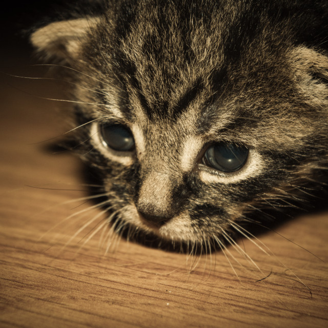 """""""Baby Cat - 10 day old kitten"""" stock image"""