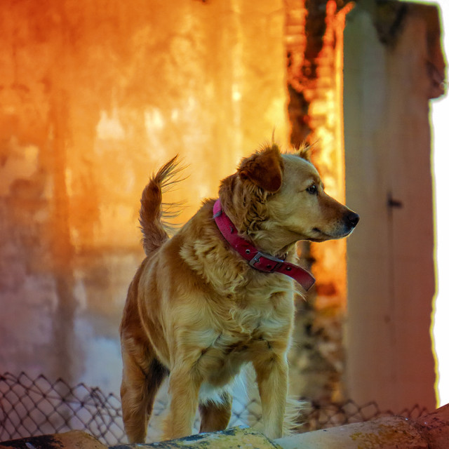 """Dog in Spain"" stock image"