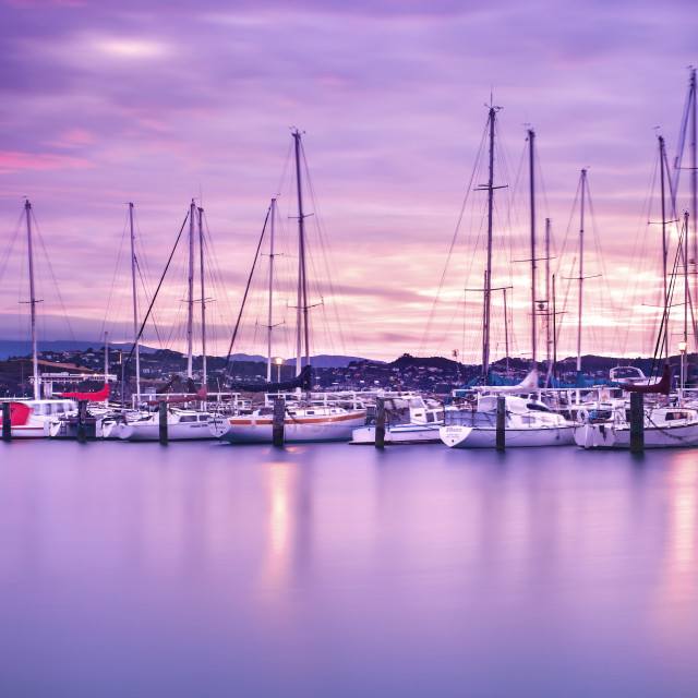 """Pink Dawn at Evans Bay Marina, Wellington, New Zealand"" stock image"