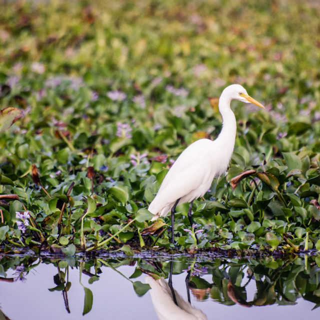 """""""A crane in the backwaters of Kerala"""" stock image"""