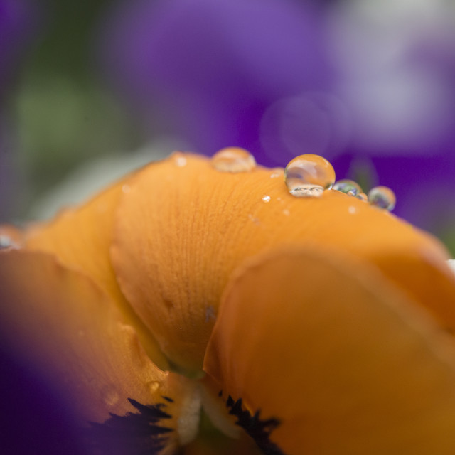 """""""Spring Drops"""" stock image"""