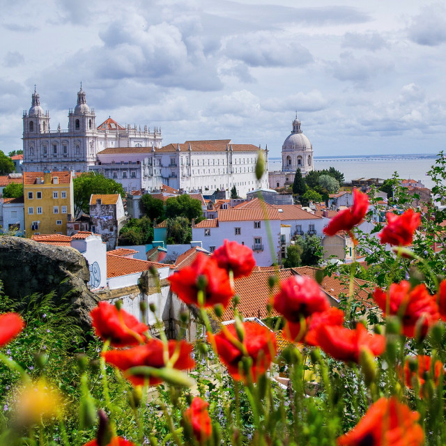 """Poppies in Lisbon"" stock image"