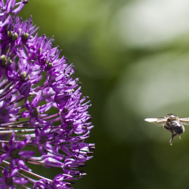 """""""Flower and a bee"""" stock image"""