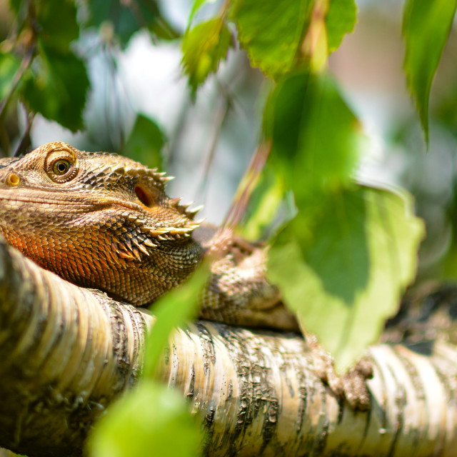 """A lizards life"" stock image"