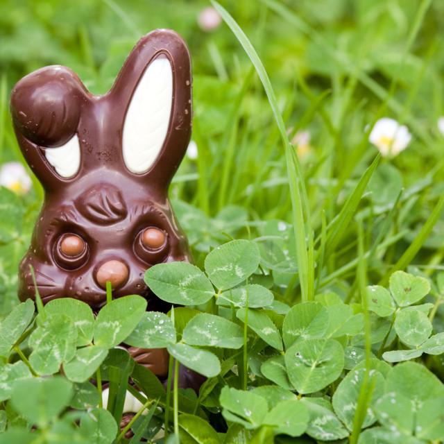 """""""hidden easter rabbit"""" stock image"""