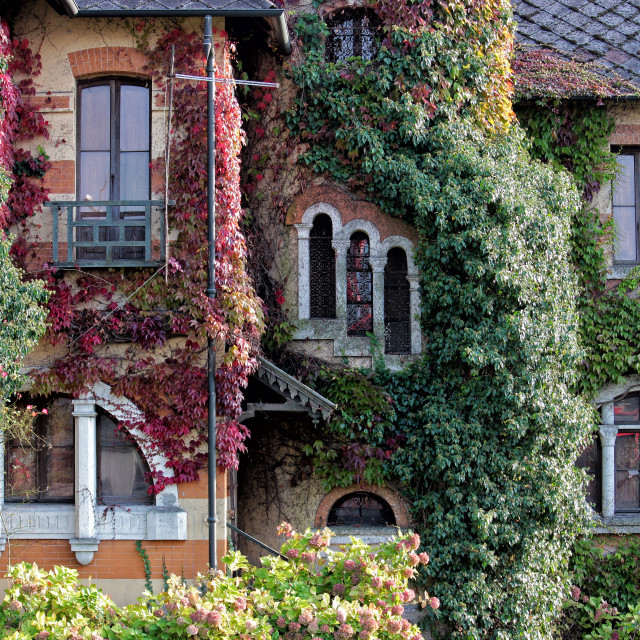 """Detail of a house covered with colored ivy"" stock image"