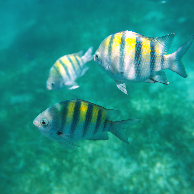 """""""Photo of a tropical Fish on a coral reef"""" stock image"""