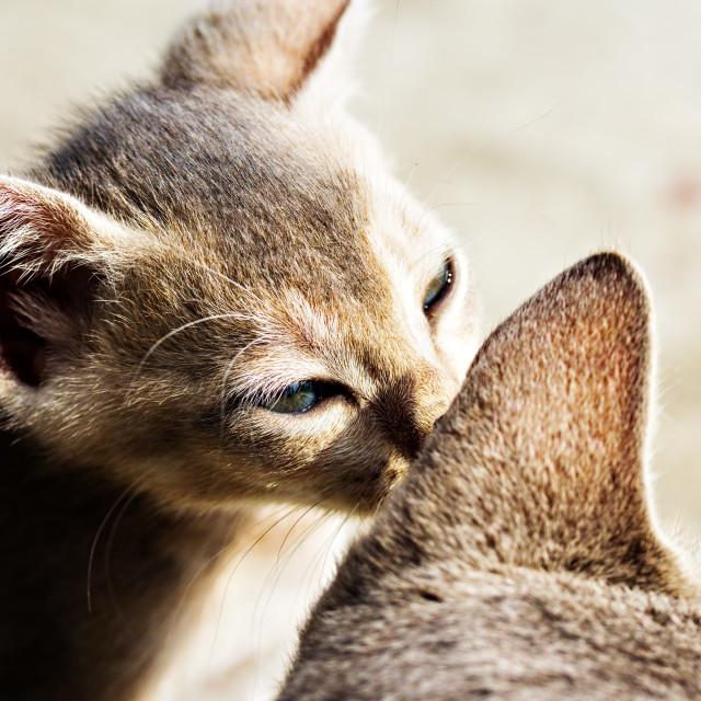 """""""Cat's Whisper"""" stock image"""