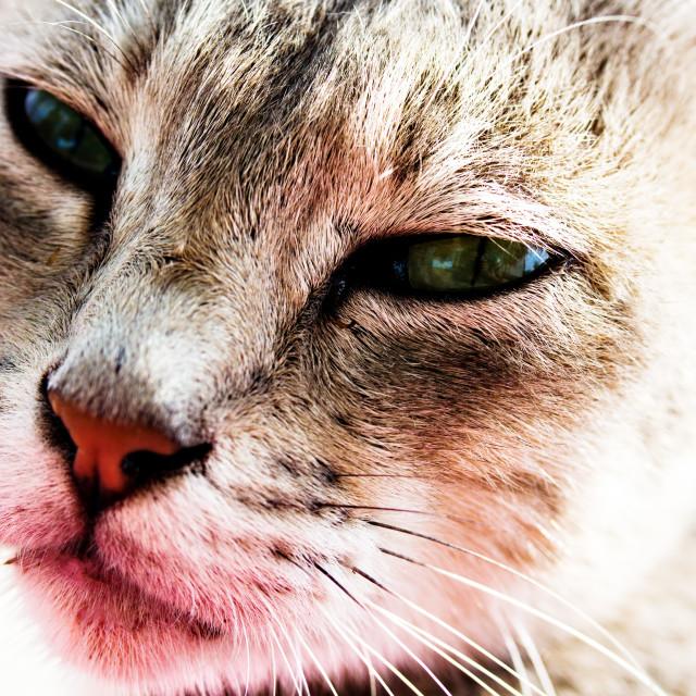 """""""Cat Close-up"""" stock image"""
