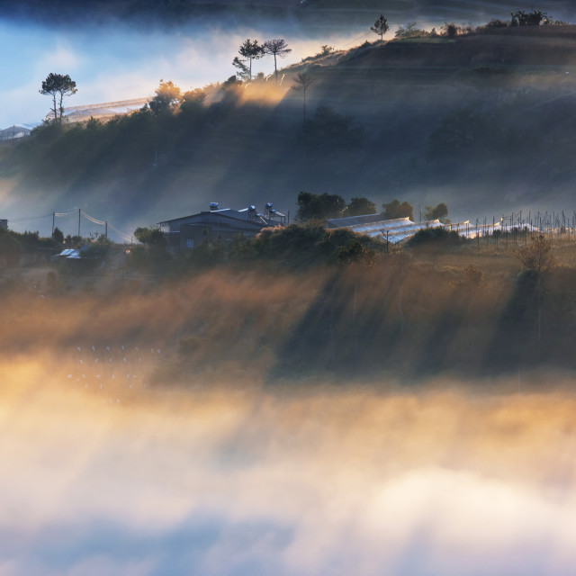 """Fog, ray, pine forest and farm – View from top of mountain, Da Lat city, Vietnam."" stock image"