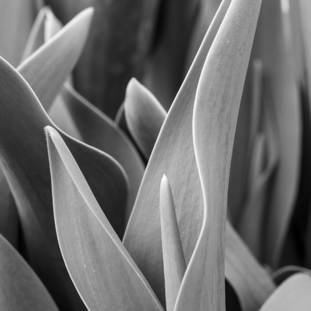 """Plants in monochrome 4"" stock image"