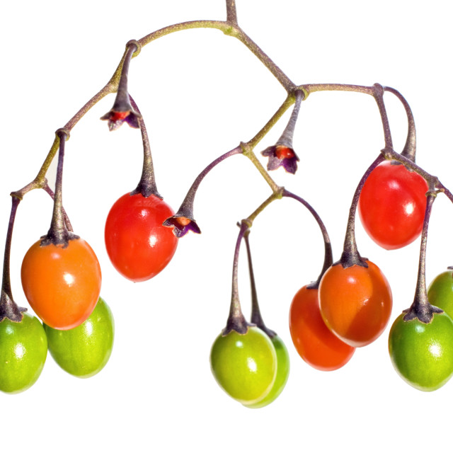 """bettersweet poison fruits"" stock image"