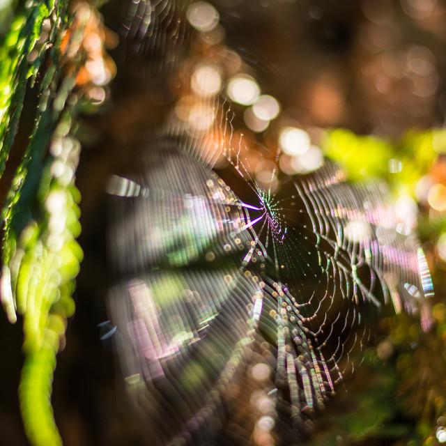 """The Spiderwick Chronicles"" stock image"