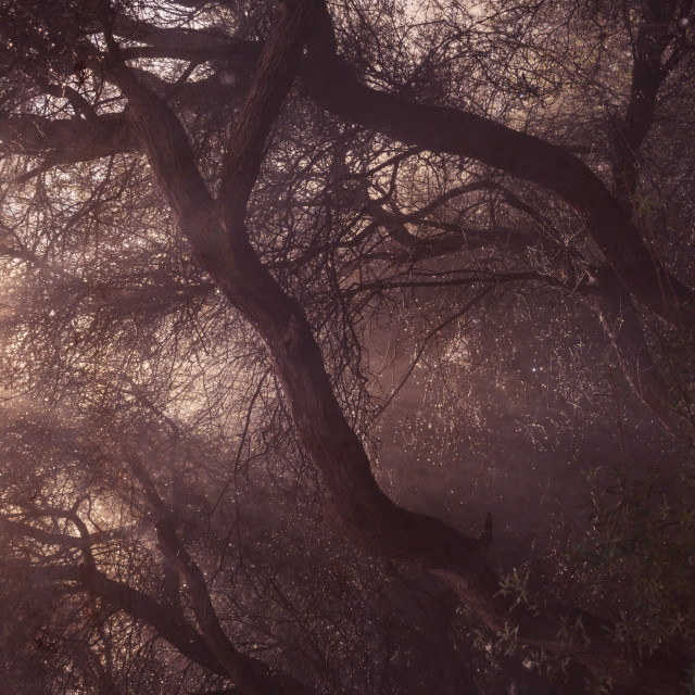 """""""Moody forest"""" stock image"""
