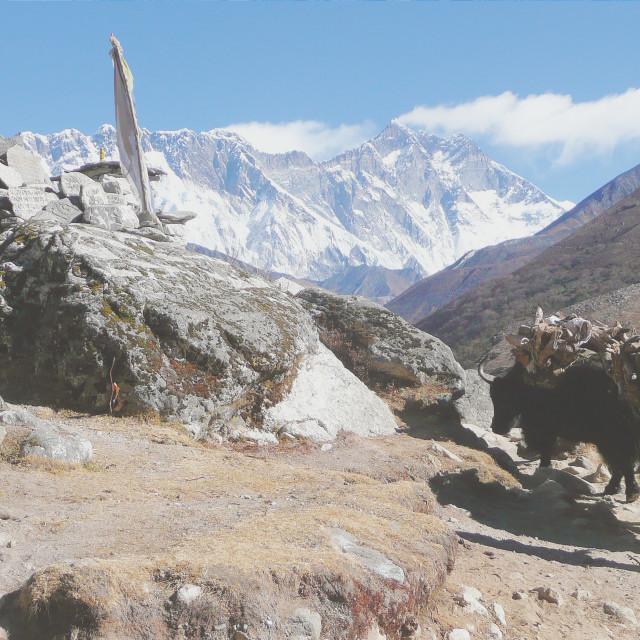 """Yak Herder & Mount Everest"" stock image"