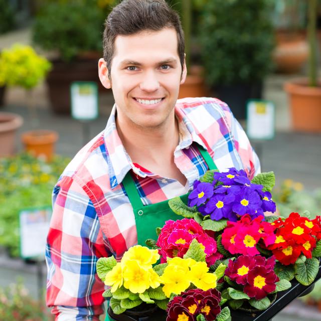 """""""Gardener in market garden or nursery"""" stock image"""
