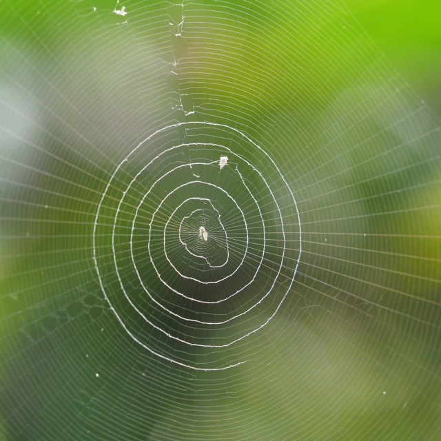"""Cobweb"" stock image"