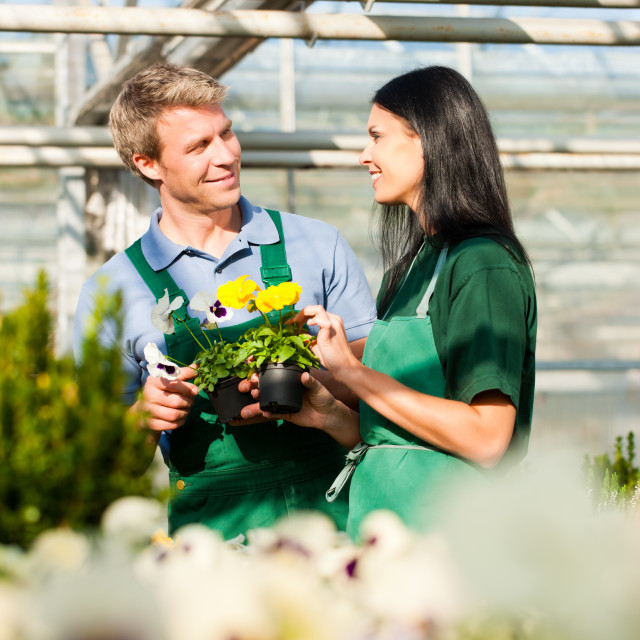 """Male and female florist or gardener in flower shop or nursery"" stock image"