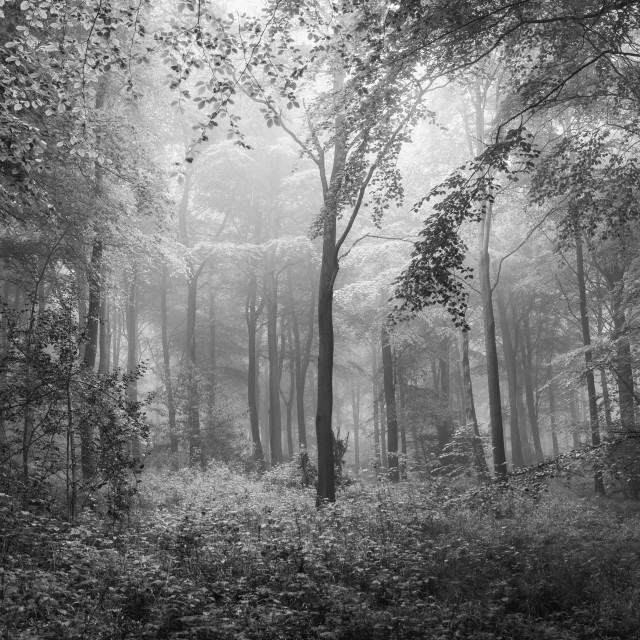 """Monochrome Mist..."" stock image"