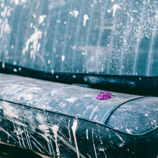 """Purple flower on an old car seat"" stock image"
