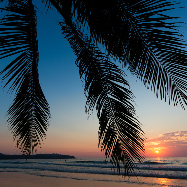 """Tropical sunset over palm tree"" stock image"