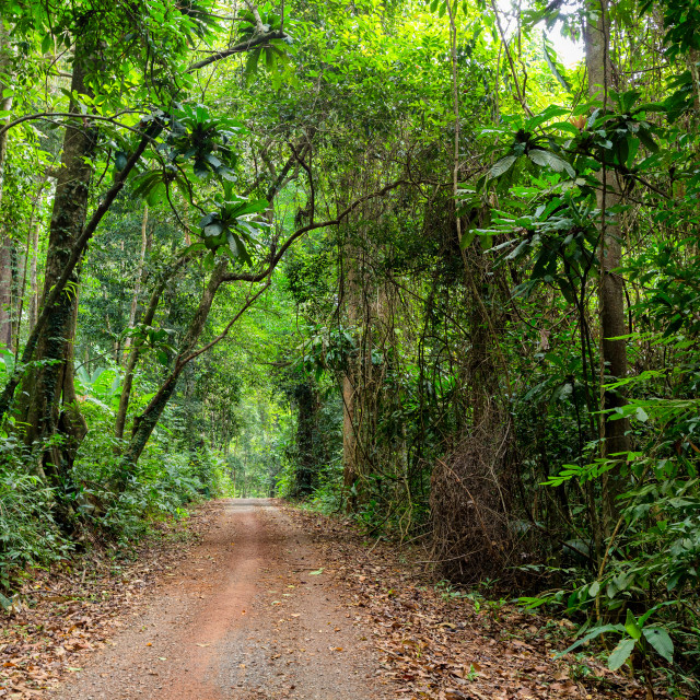 """road in deep jungle"" stock image"