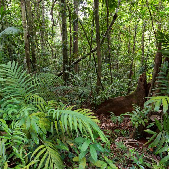 """""""Deep jungle in Ko Kood island"""" stock image"""