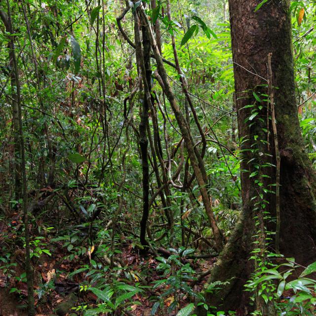 """Deep jungle in Ko Mook island"" stock image"