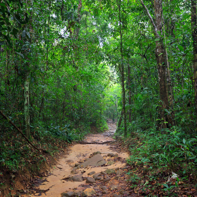 """Path in deep jungle"" stock image"