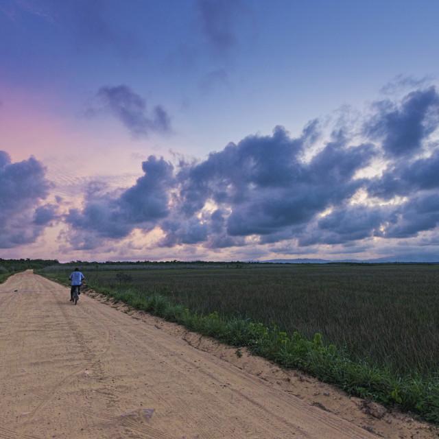 """""""Marshland at dusk"""" stock image"""