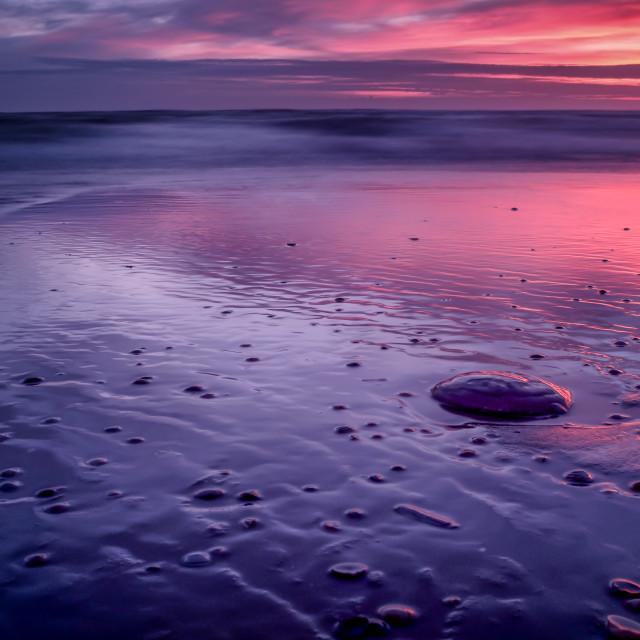 """A Jellyfish Sunset - Pink"" stock image"