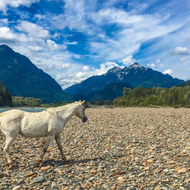 """""""Horseback Riding, Squamish"""" stock image"""
