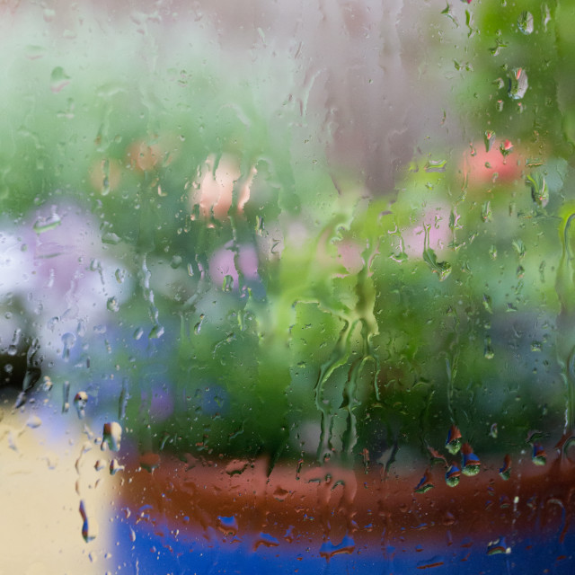 """Flowers in the rain"" stock image"