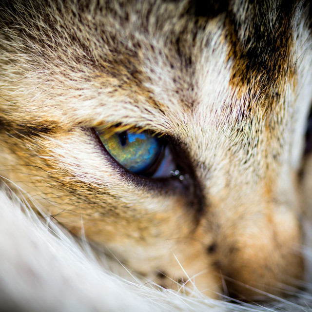 """A Kitten's Eye"" stock image"