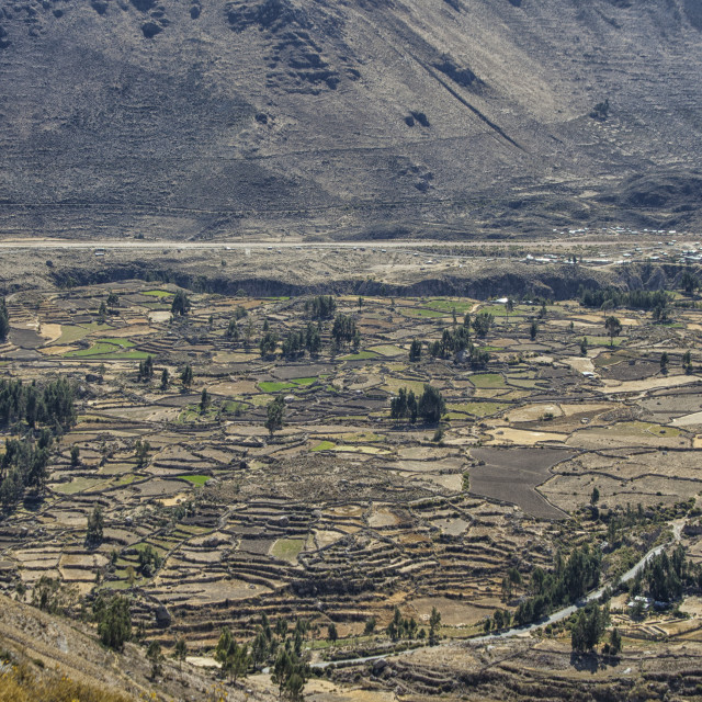 """Colca Canyon in Peru"" stock image"