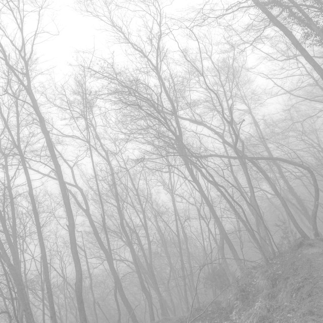 """""""foggy forest 1"""" stock image"""