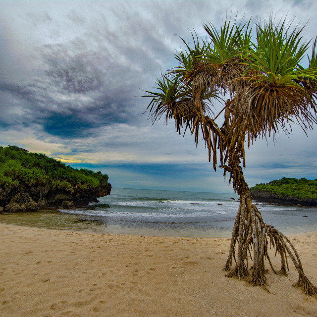 """Beach tree"" stock image"